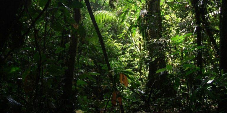 Forestry research Ecuador