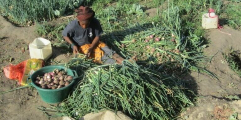 Sustainable agriculture in The Gambia