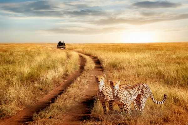 volunteer abroad alliance - tanzania - Moshi - leisure